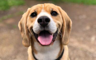 Er du og din familie klar til at få en hund?